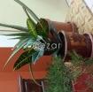 Plants urgent sale photo 2