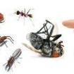 Pest Control Service Qatar photo 1