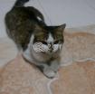 Cat for FREE Adoption! photo 2