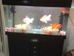 Fish Aquarium for Sale for sale in Qatar