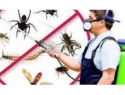 Best Pest Control Service in Qatar in Qatar