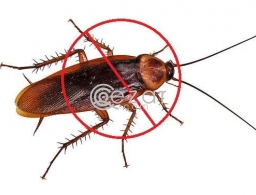 PEST CONTROL SERVICES in Qatar