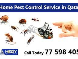 Pest control Doha Qatar 149QAR onwards in Qatar