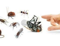 Pest Control Service Qatar in Qatar