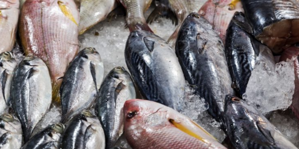 A new fish market set to open its doors at Al Khor