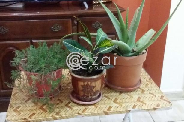 Plants urgent sale photo 1