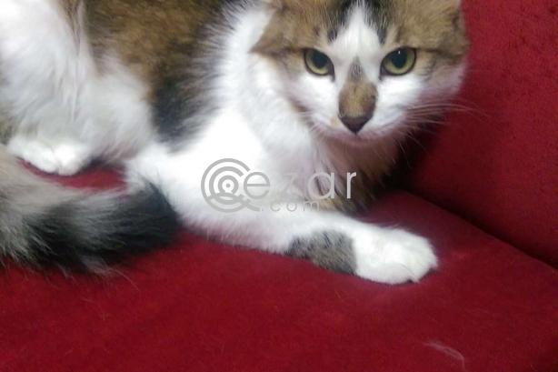 Cat for FREE Adoption! photo 3