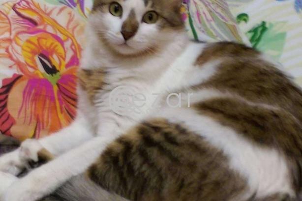 Cat for FREE Adoption! photo 1