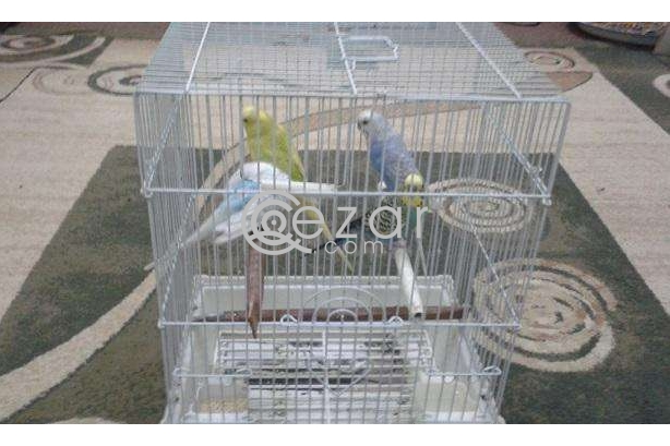FREE; Colorful & Healthy Birds 2 Pairs with Cage photo 2